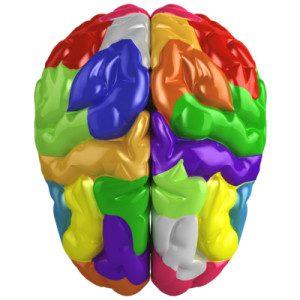 brain-success-01